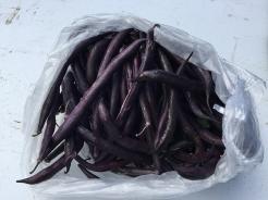 beans_6248