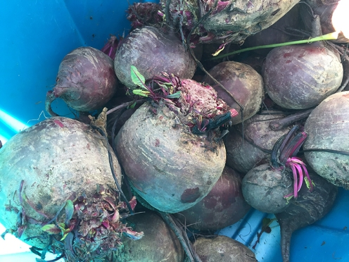 beets_6409