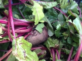 beets_8200
