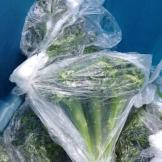 broccoli_8193