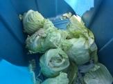 cabbage_6348
