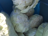 cabbage_6570