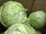 cabbage_8206