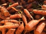 carrots_6571
