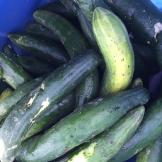 cucumber_6402