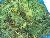 herb_6397