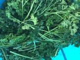 herb_6559