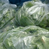 lettuce_8201