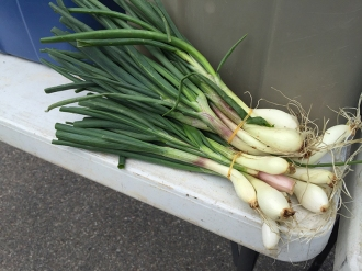 onions_6238
