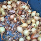 onions_6681