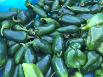 peppers_6573