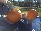 pumpkins_6580