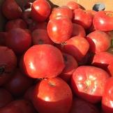 tomatoes_6407