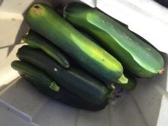zucchine_6353