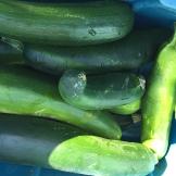 zucchini_6416